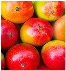 Fresh exotic fruits & vegetables – SS-FRUTAS Imports inc